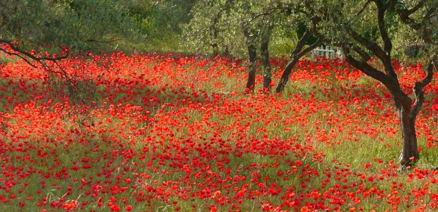 Picturesque-Provence
