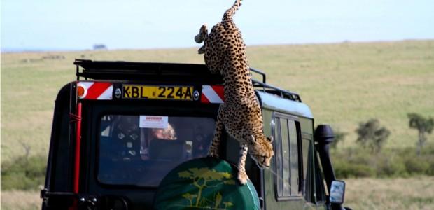 Safari-Vacation